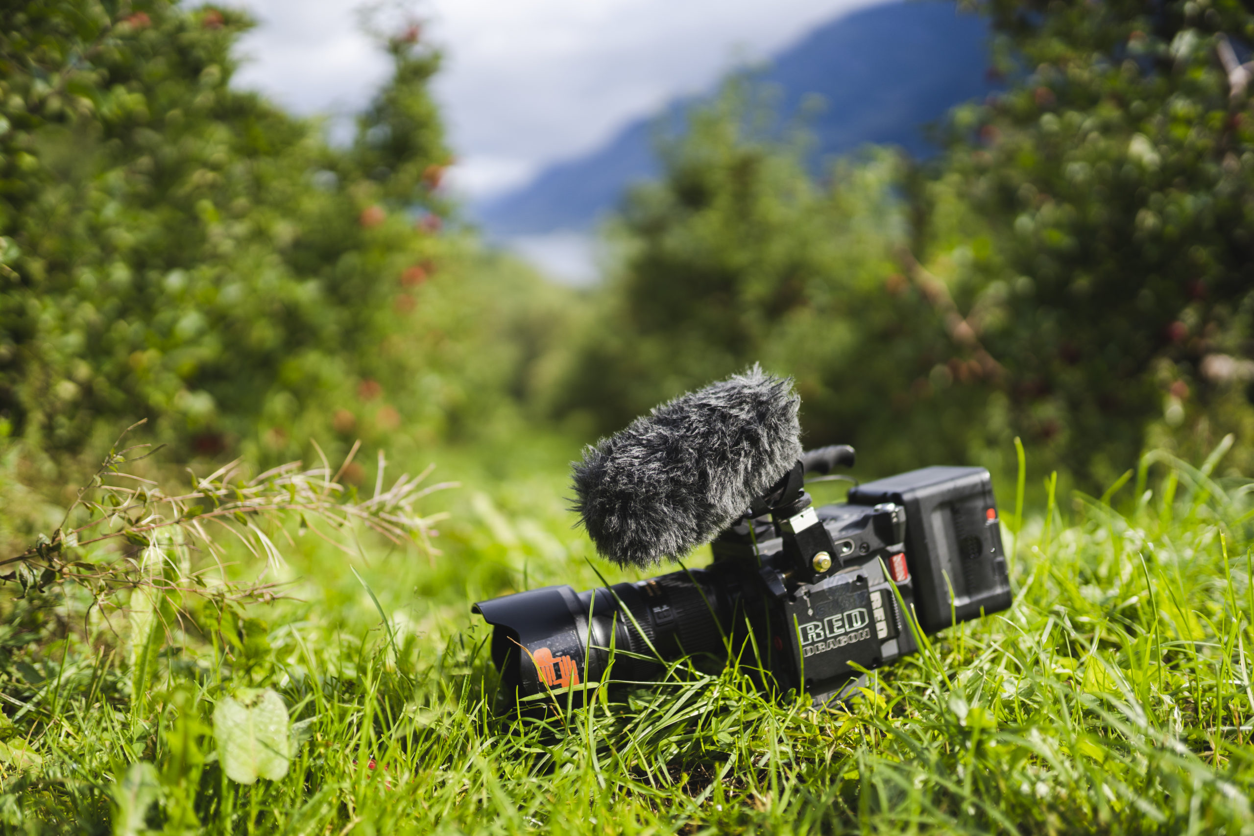 Filmkamera liggande i gras mellom epletre. Foto.